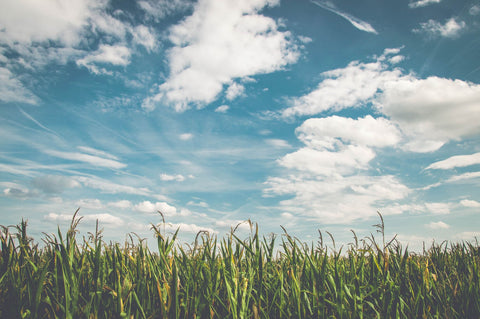 How To Increase Oxygen Levels While Sleeping: 3 Easy Tips, blue sky over field