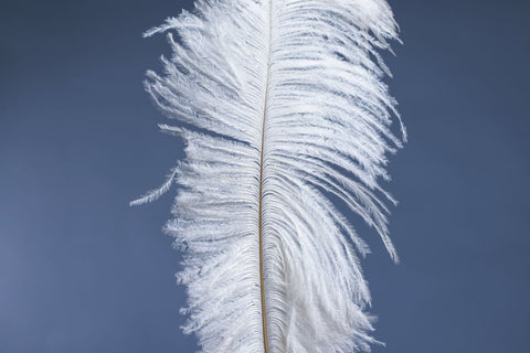 Down is softer than down alternatives, feather on blue blackground