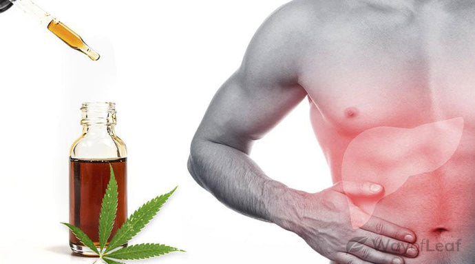 Is CBD Good for Your Liver?