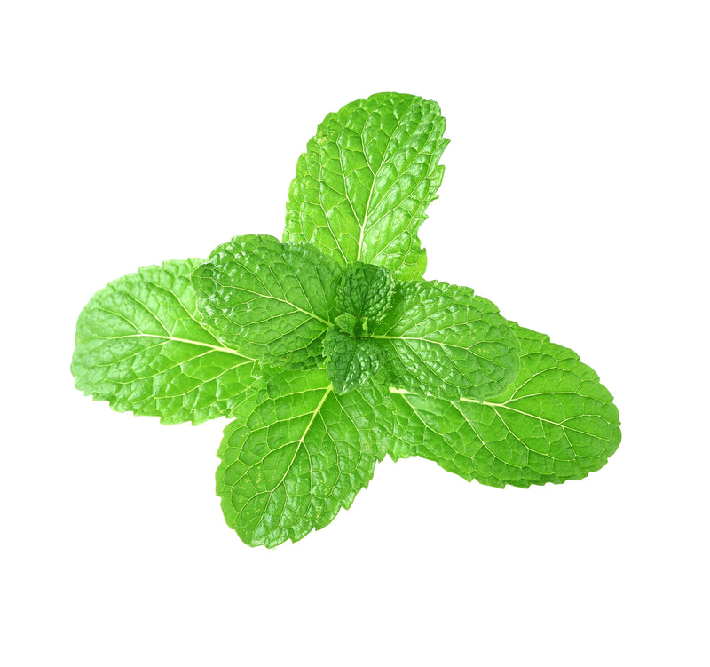 Capella Flavors Cool Mint Vape Juice Concentrate