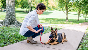 Canines First Dallas Dog Training and Products