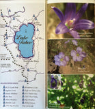 Wildflowers of Tahoe Booklet