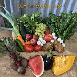 Autumn Bargain Box