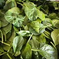 Baby English Spinach : 140g