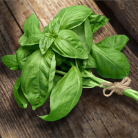 Basil : Bunch