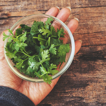 Coriander, fresh : Bunch