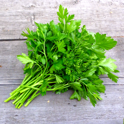 Parsley, Continental : Bunch
