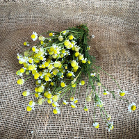 Chamomile, Fresh : Bunch : Organic