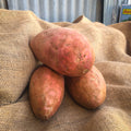 Sweet Potato : Large each