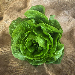 Lettuce, Cos : Farm Fresh