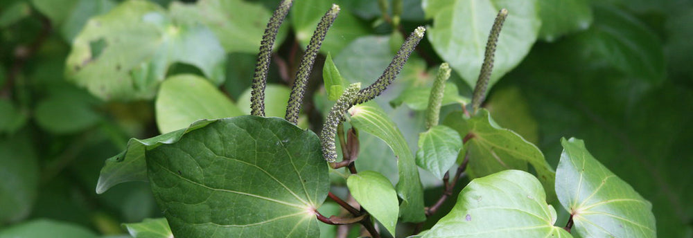 What is Kawakawa Used For?