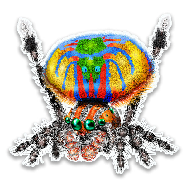 Peacock Spider Maratus Volans Die-Cut Magnet for Refrigerator, Helmet, Locker or Car 3x3 Inches