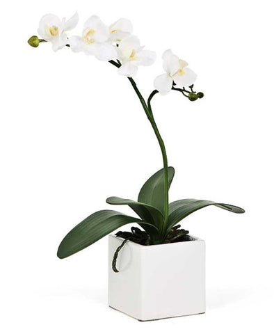 Orchid Potted Faux White - Small