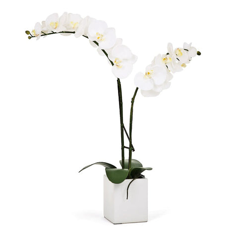 Orchid Potted Faux White - Medium
