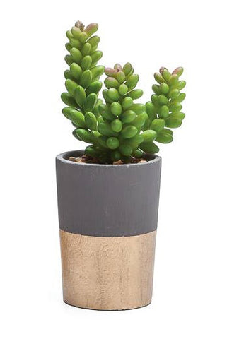 Oro Gold Band Potted Faux Sedum Succulent