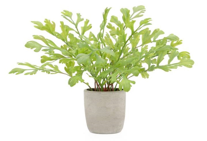 Solaro Round Potted Faux Plant - Rabbit Ear