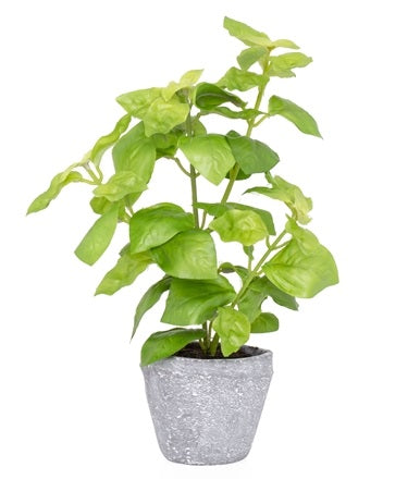 Provence Rustic Potted Faux Green Basil Herb Plant - Small