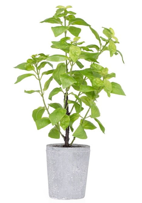 Provence Rustic Potted Faux Green Basil Herb Plant - Large