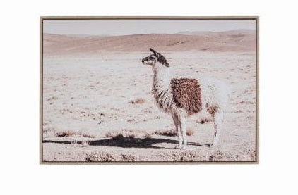 Canvas Wall Decor – Desert Alpaca