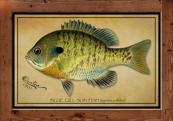 Collection of S.F. Denton Fish Giclee Reproduction Prints