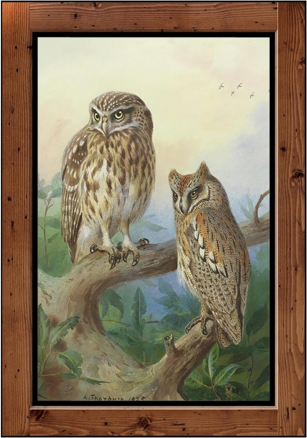 "Archibald Thorburn  ""Little Owl and Scops Owl  (1925)"