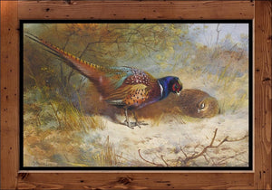 "Archibald Thorburn  ""Pheasants""  (1918)"