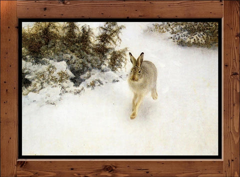 "Bruno Liljefors  ""Winter Hare""  (1908)"
