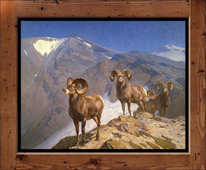 "Carl Rungius  ""Big Horn Sheep on Wilcox Pass  (1912)"