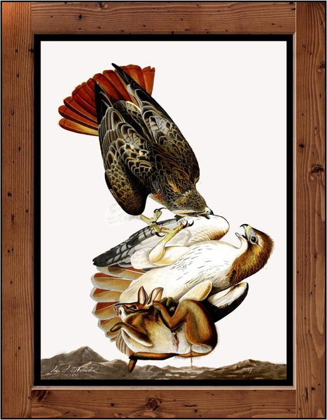 "Audubon Plate-51  ""Red Tailed Hawk""  (1827-1838)"