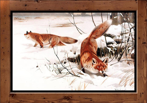 "Wilhelm Kuhnert  ""Common Foxes in the Snow""  (1893)"
