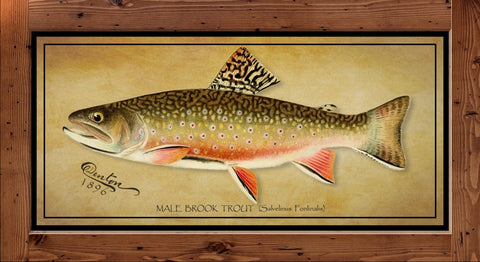 Denton Fish Print - Brook Trout  (1896)