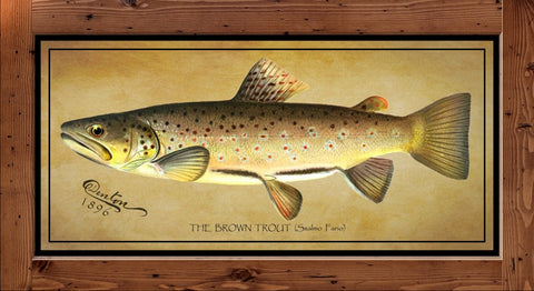 Denton Fish Print - Brown Trout  (1896)