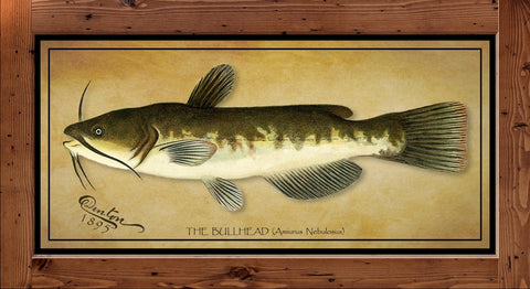 Denton Fish Print - Bull Head  (1895)