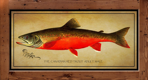 Denton Fish Print - Canadian Red Trout  (1895)