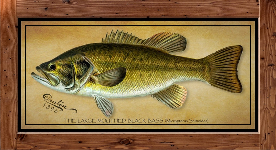 Denton Fish Print - Large Mouth Bass  (1896)