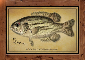 Denton Fish Print - Rock Bass  (1901)