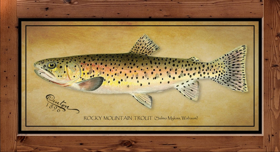 Denton Fish Print - Rocky Mountain Trout  (1896)