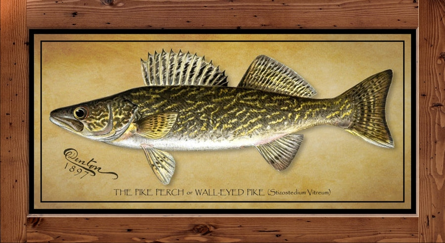 Denton Fish Print – Walleye  (1897)