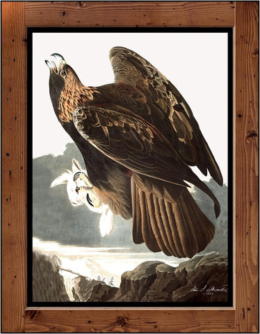 "Audubon Plate-181  ""Golden Eagle""  (1827-1838)"