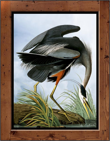 "Audubon Plate-211  ""Great Blue Heron""  (1827-1838)"