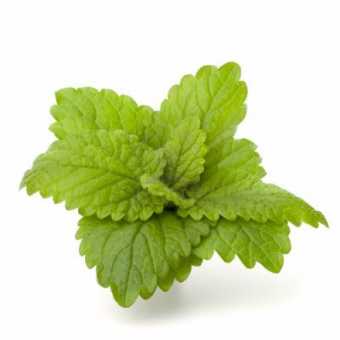 omorfee-peppermint-essential-oil-peppermint-oil-peppermint-oil-for-hair-mint-oil-peppermint-oil-for-headaches