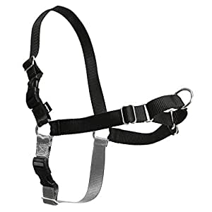 easy walk dog Harness for dogs  at brandy's