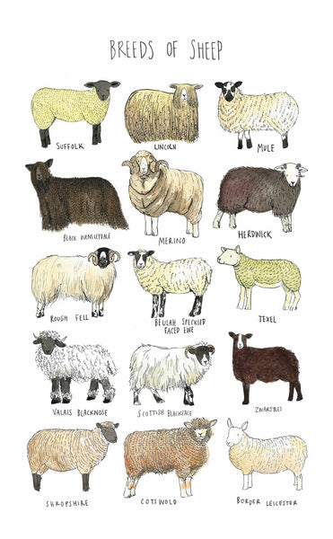 Breeds of Sheep Tea Towel