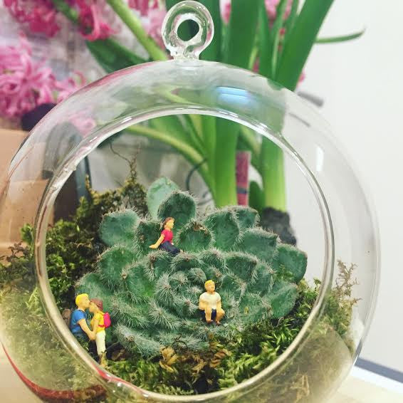 Terrarium Combo Sphere - Peter Hall & Son