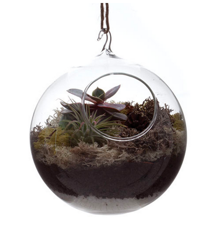 Hanging Terrarium - Peter Hall & Son