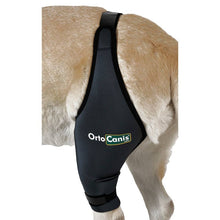 Load image into Gallery viewer, OrtoCanis Cruciate Ligament / Knee brace