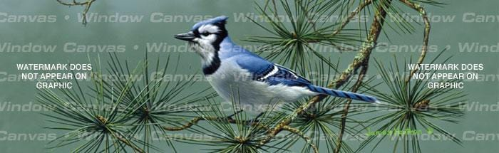 Blue Jay Rear Window Graphic - Custom Vinyl Graphics