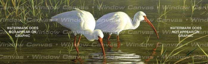 Ibis Rear Window Graphic - Custom Vinyl Graphics