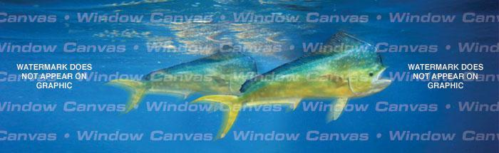 Mahi Mahi Rear Window Graphic - Custom Vinyl Graphics