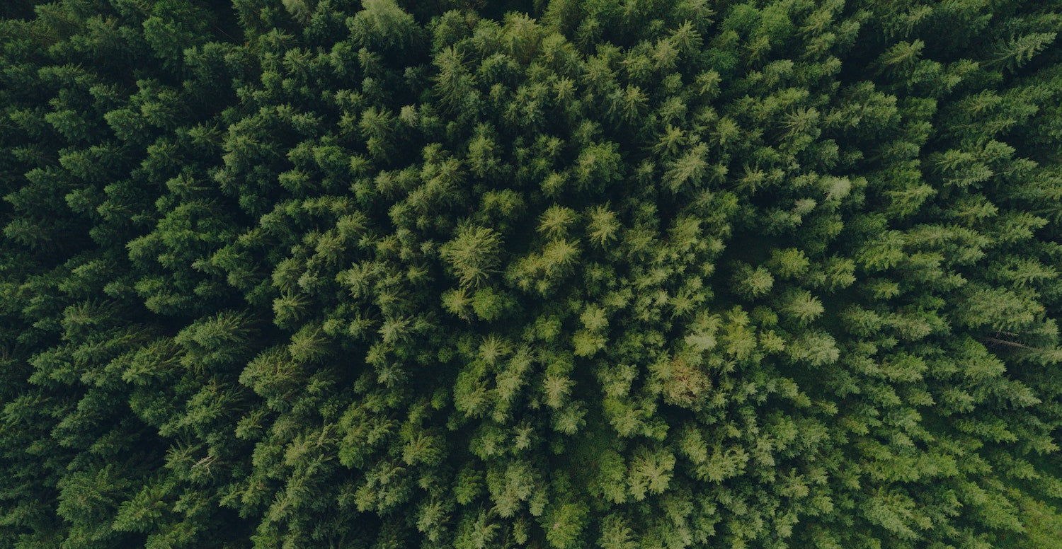 Aerial shot of a green forest of trees